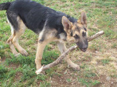 """""""I love sticks!"""""""